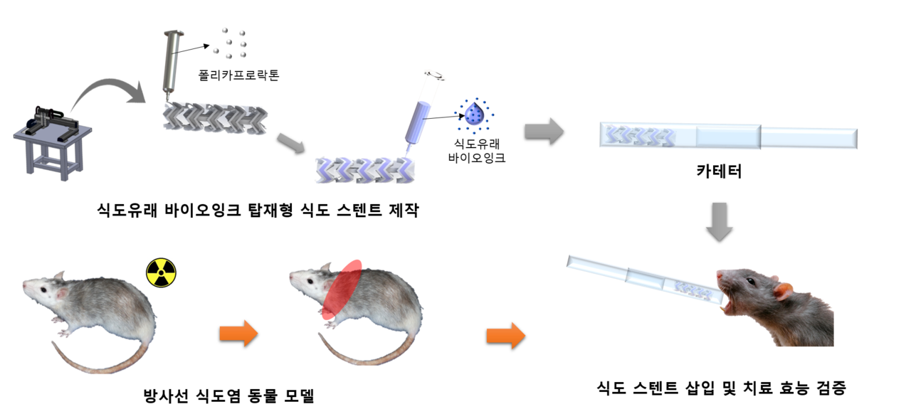 포스텍과 에드믹바이오 연구팀이 '방사선 식도염'치료를 위한 '식도 스텐트'를 개발했다. 동물실험을 통해 치료효능을 검증했다.[사진=포스텍 제공]