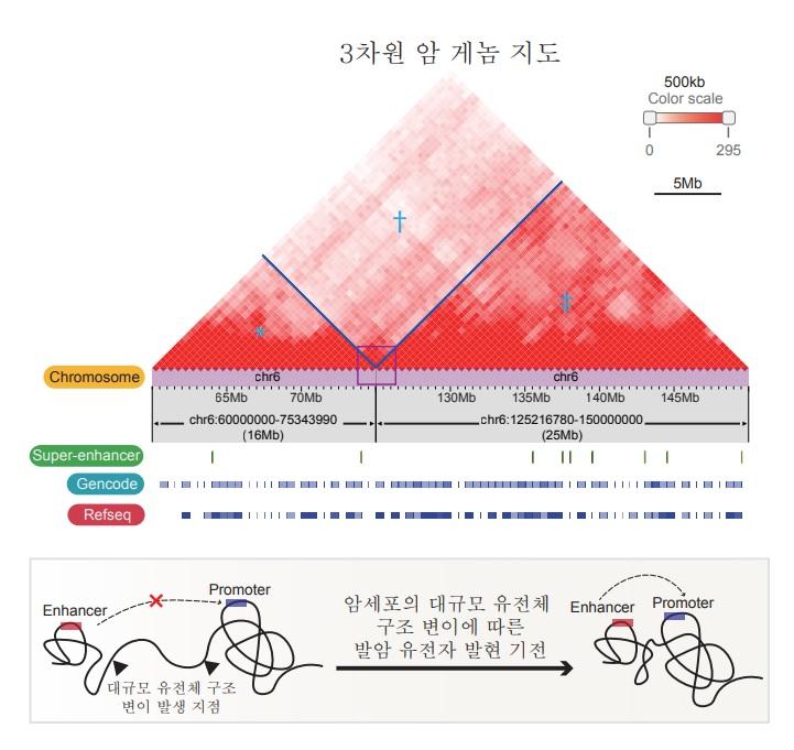 국내 연구진이 3차원 암 게놈 지도 해독을 통한 유전자 조절기능을 규명했다. [사진=KAIST 제공]
