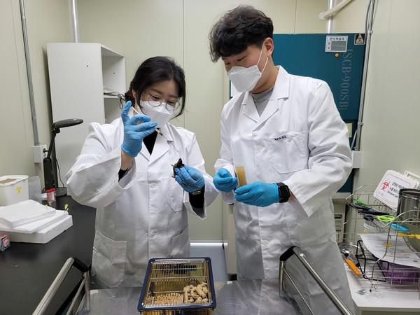 한국원자력연구원은 식용곤충에 기반한 항암 및 면역력 증강 기술을 개발해 바이오벤처기업 비플럭스파머에 이전했다. [사진=한국원자력연구원 제공]